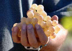 Goede wijn behoeft goede druiven, maar de wijnmaker beslist.